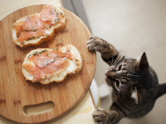 Foods poisonous to cats feature