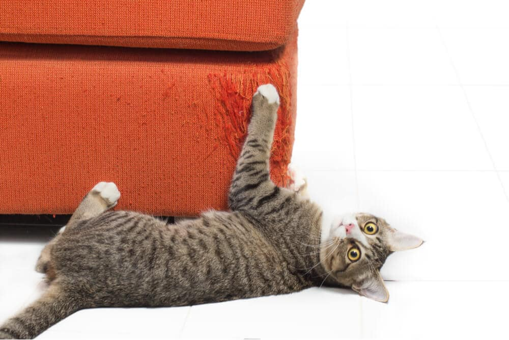 How to stop your cat scratching furniture feature
