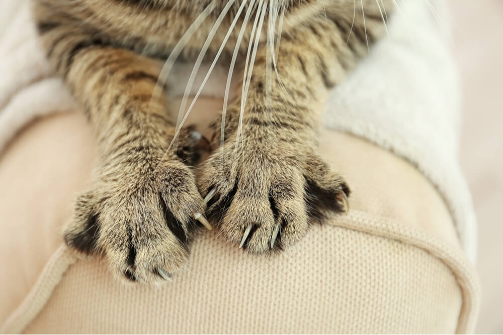 Cat claws on furniture