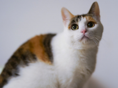 Pyometra in Cats Feature