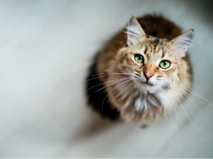 Cat Upper Respiratory Infection Feature