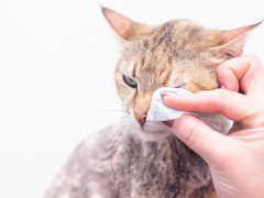 Conjunctivitis in Cats Feature
