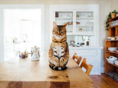 Food Aggression in Cats Featured Image