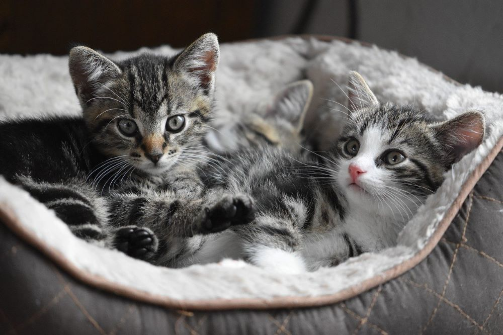Very Young Kittens