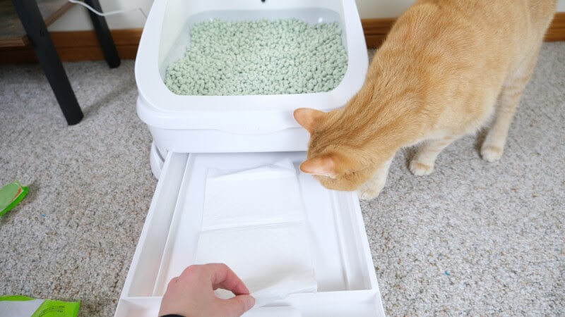 Putting litter pad into the Toletta litter box.
