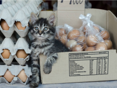 Can Cats Eat Eggs Feature