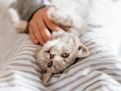 Epilepsy in Cats Featured Image