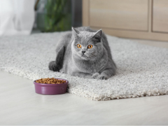 How much to feed a cat feature