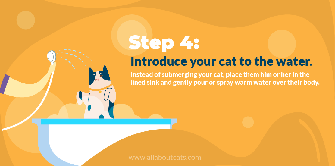 How to Give a Cat a Bath Step 4 Introduce Your Cat to Water