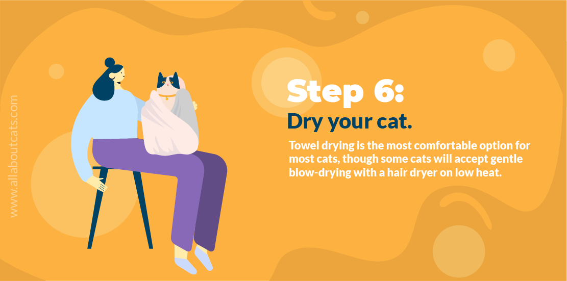 How to Give a Cat a Bath Step 6 Dry Your Cat