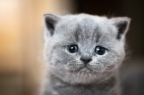 255 Best Male Female Gray Cat Names Of 2021 We Re All About Cats