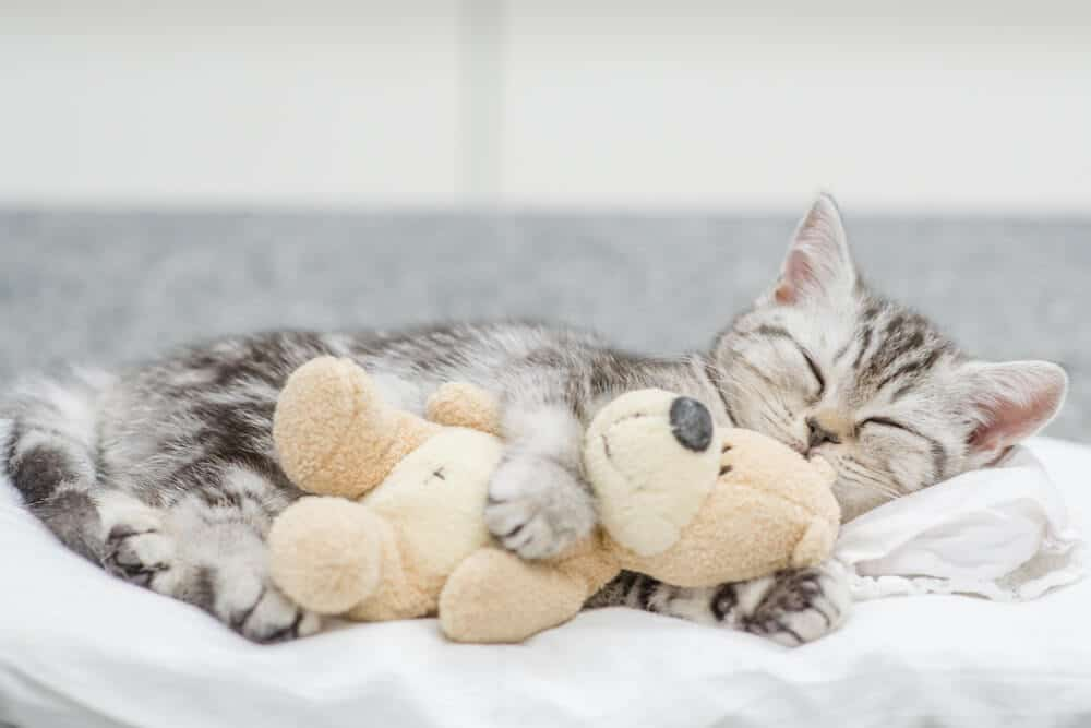 Cat Cold Hugging Toy