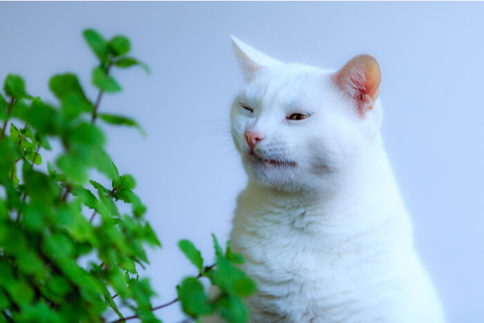 White cat sneezing next to a green plant