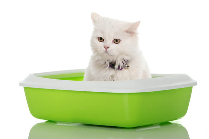 Cat in green litter box