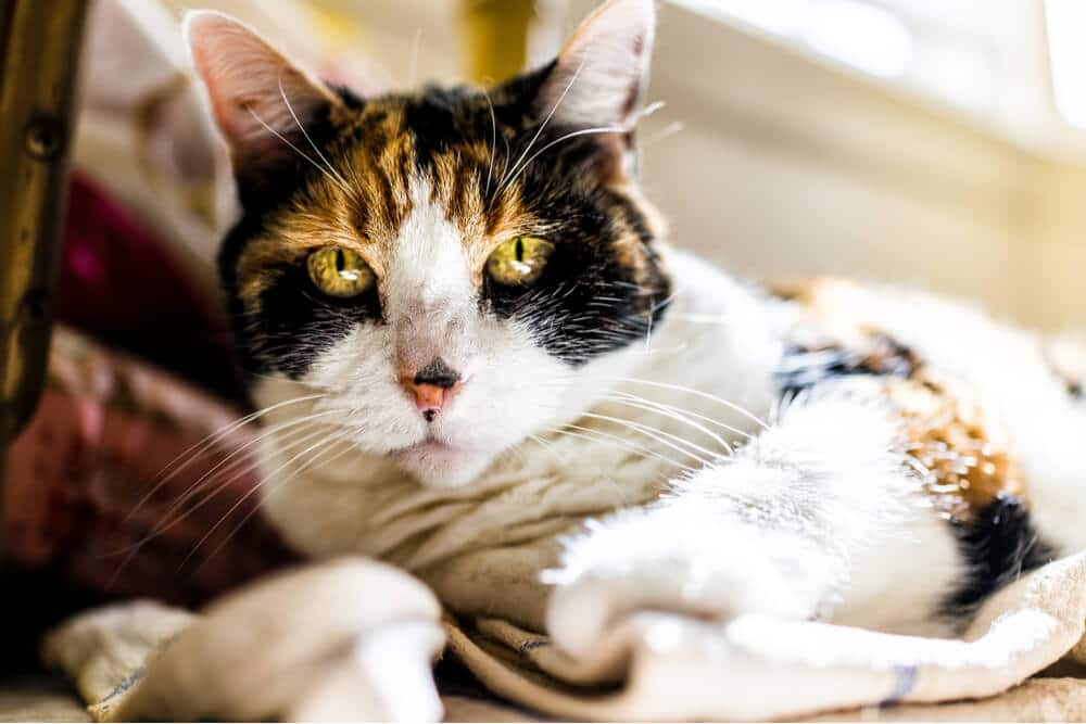 Kidney Failure in Cats Feature