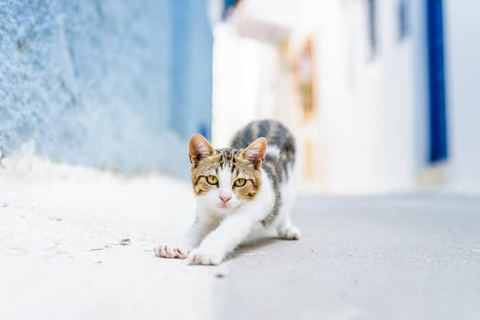 Aegean Cat Care