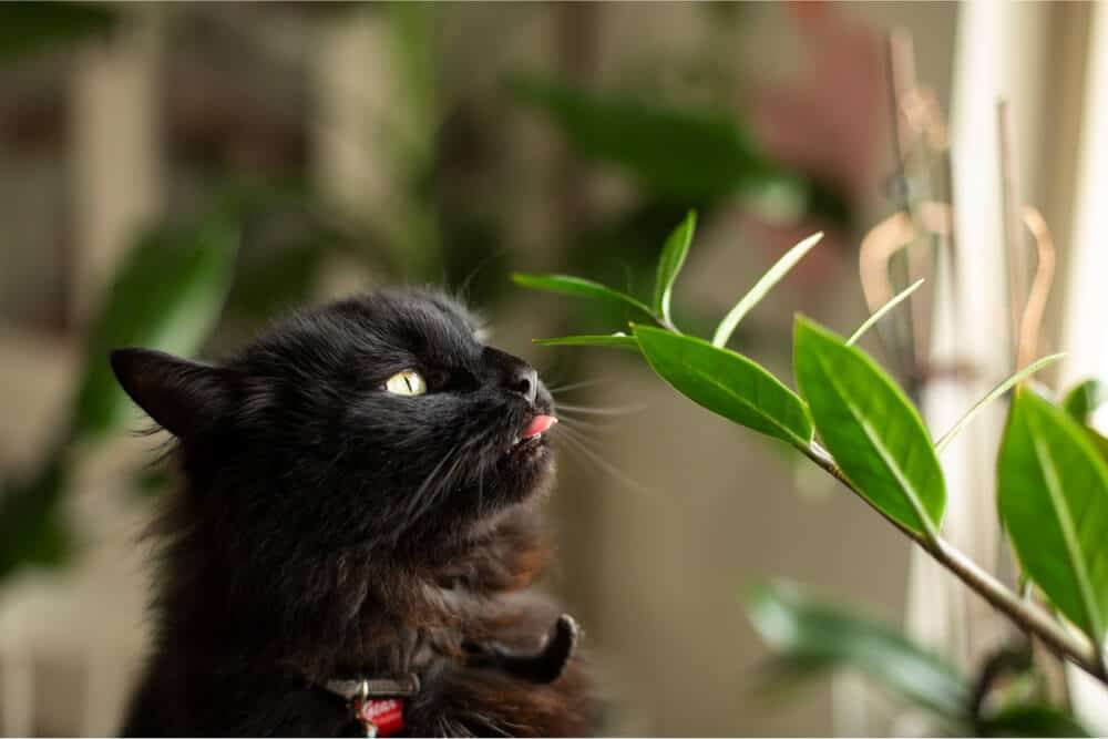 Cat chewing on houseplant