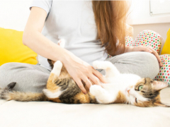 toxoplasmosis and cats feature