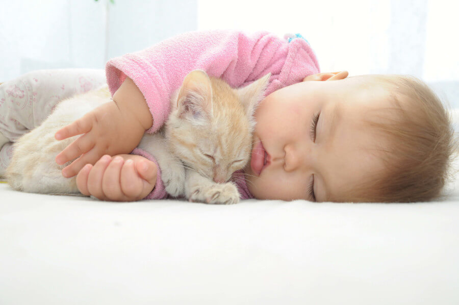 kitten and baby sleeping together