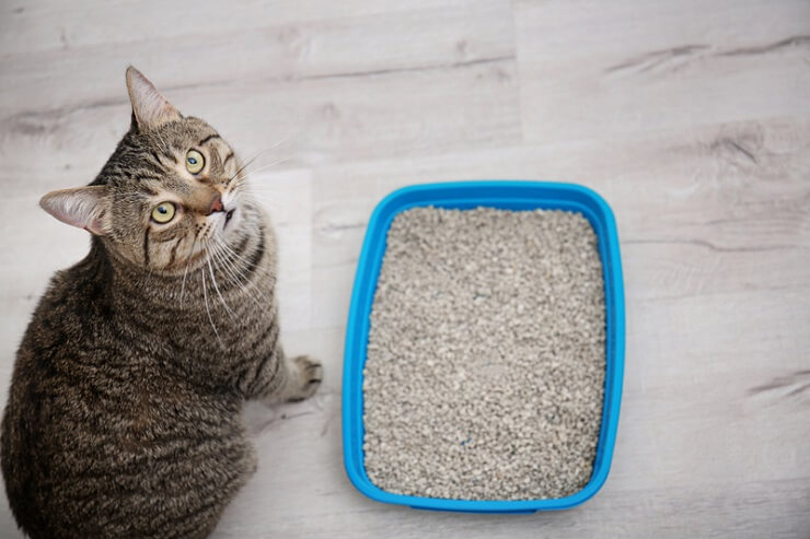 cat sitting next to a litter box and looking up