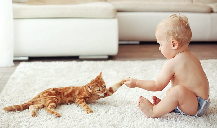 benefits and risks of cats and babies
