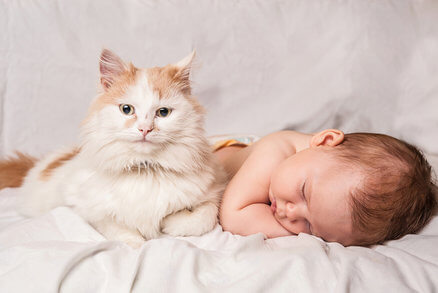 health benefits of cats and babies