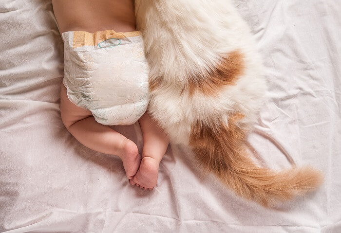 cat and baby in diapers