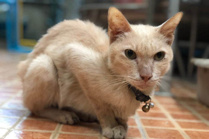 How do cats get infected with giardia
