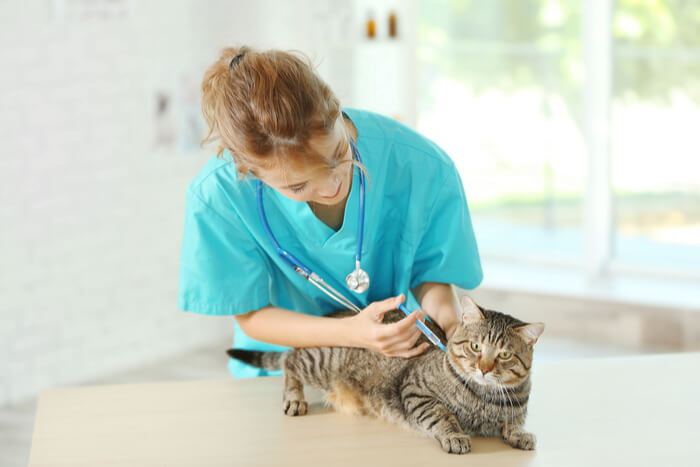 Diagnosis of Lymphoma in Cats