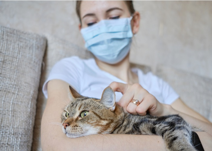 Treatment of Lymphoma in Cats