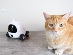 Cat with Rocki Robot Companion