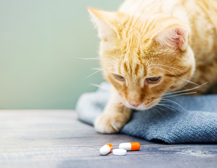 Treatment of tapeworms in cats