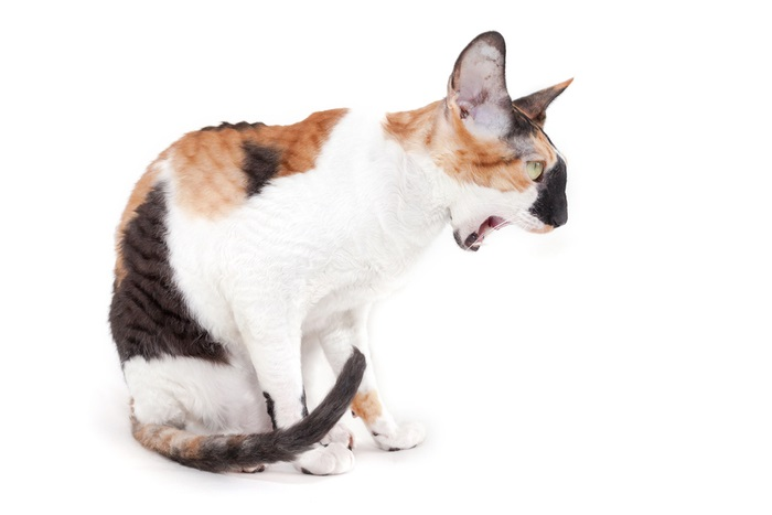 What to do if your cat vomits foam