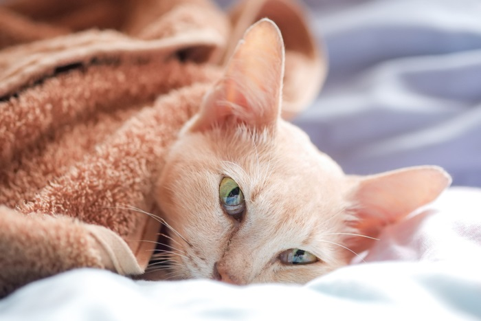 Types of lung cancer in cats