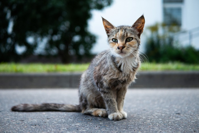 Treatment of Giardiasis in Cats
