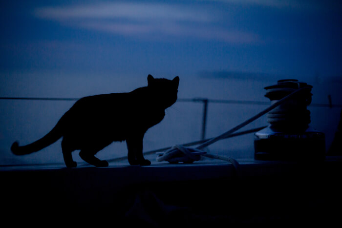 Cat active at dusk