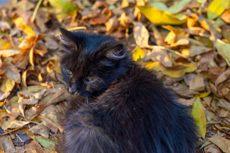 Cat sitting outdoors in leaves