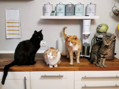 Cats on Counter Feature