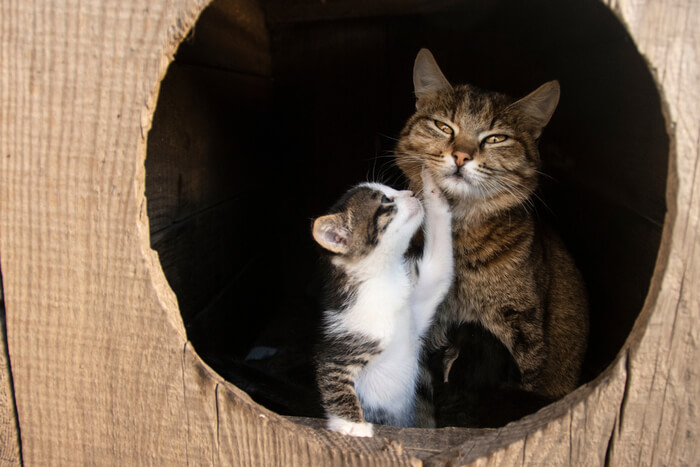 How to prevent cat biting