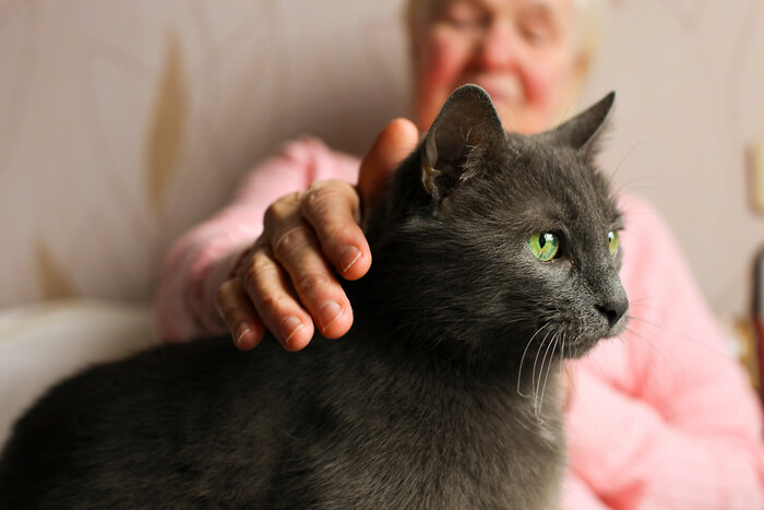 What is high blood pressure in cats