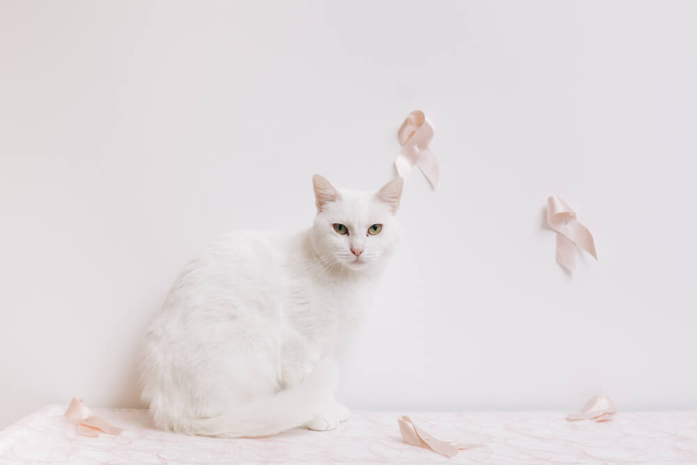 Breast cancer in cats prognosis