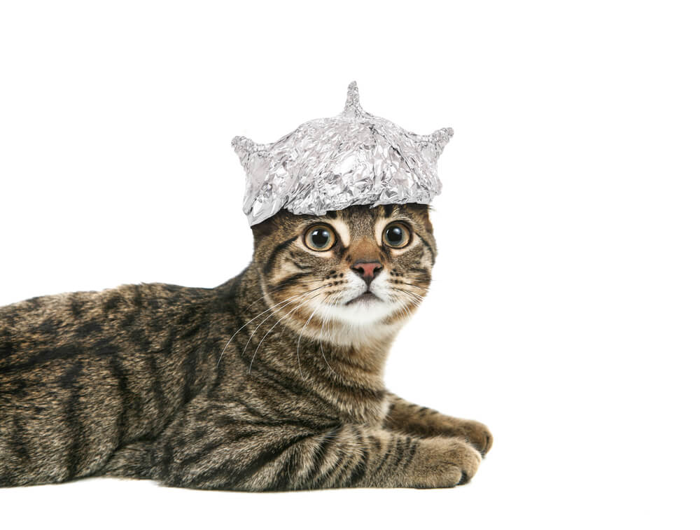 cat with tin foil hat on head
