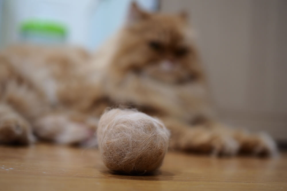 Hairballs as a cause of hiccups in cats
