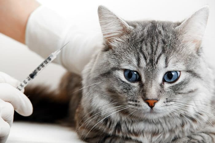 Buprenorphine for Cats: What It Does, How It Works, and How to Use It - All  About Cats