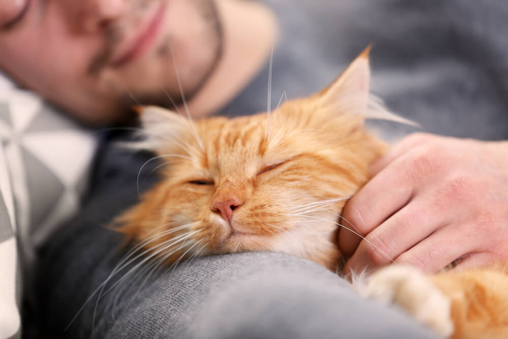 Reduce allergens by keeping your cat out of your bedroom