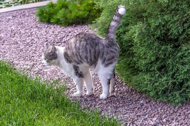 Do Female Cats Spray? (Common Reasons & Prevention) - All About Cats