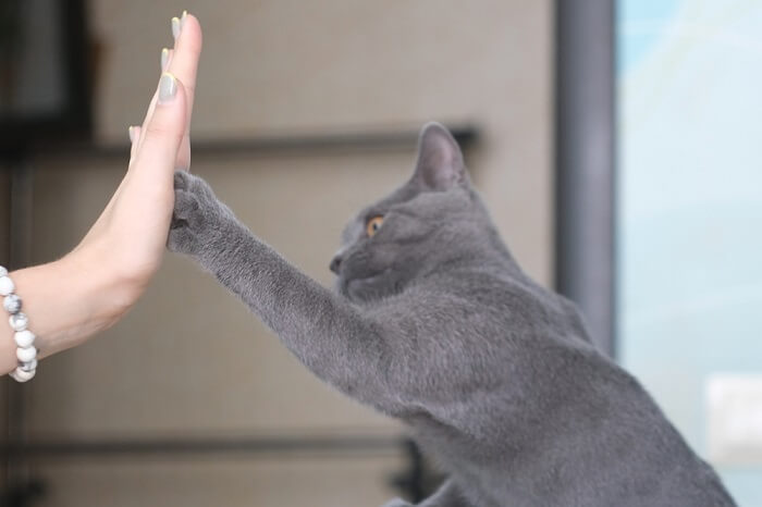 Cat and person high five