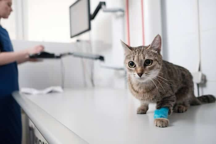 Treatment for bladder stones in cats