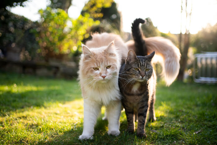 Two cats walking close together