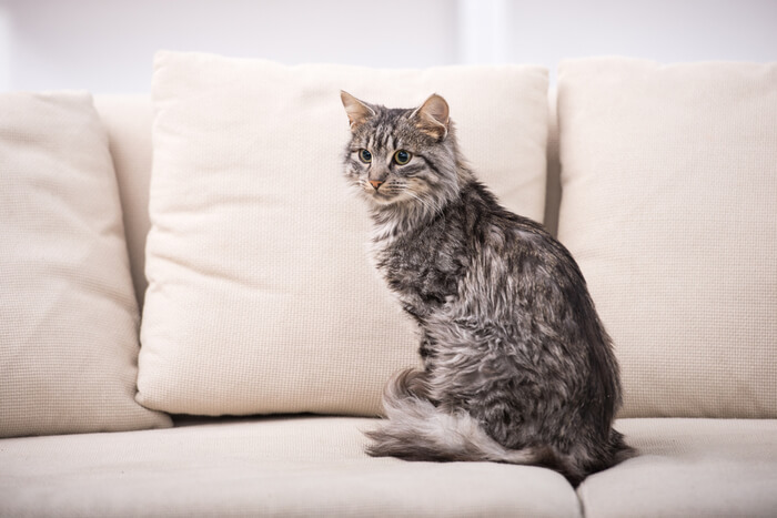 Cat sitting on couch with tail wrapped around paws